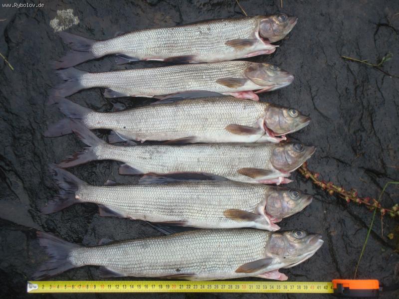 Охота и рыбалка организация охоты и рыбалки стоимость